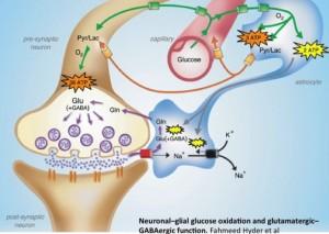 synaptic-metanbolism-e1372358920606