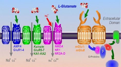 glutamatergic receptors