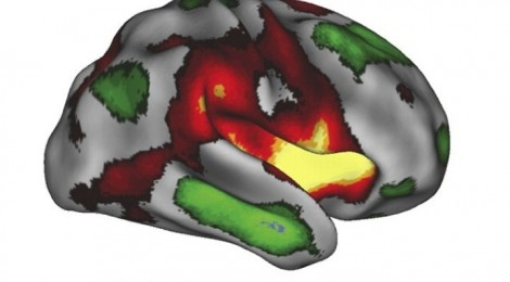 imagination in the brain