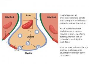 Funciones de la glicina