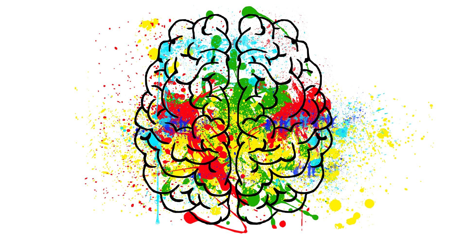 31-brain-2062048_1920